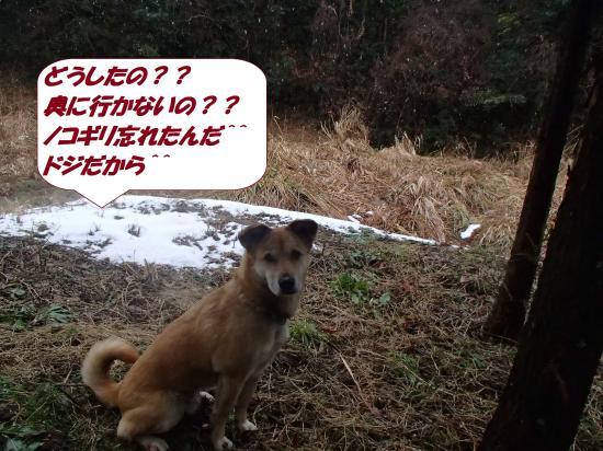 P1210226_convert_20140122081149.jpg