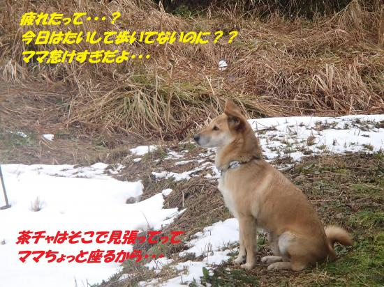 P1210231_convert_20140122081235.jpg