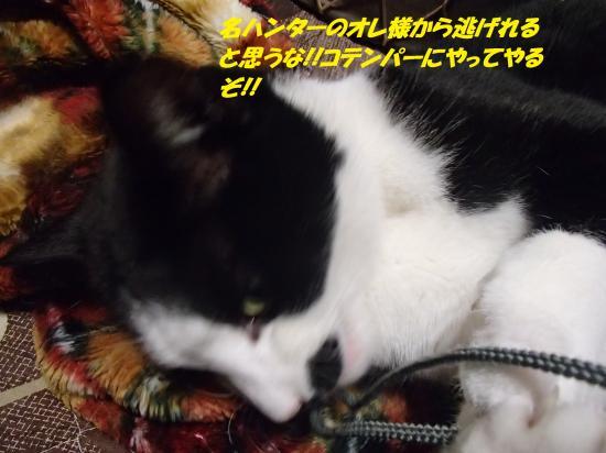 P1210240_convert_20140123071147.jpg