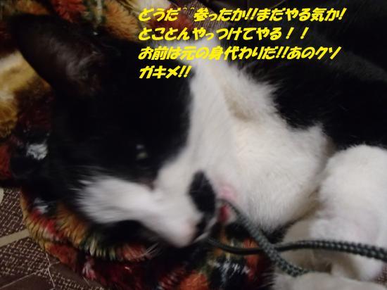 P1210241_convert_20140123071219.jpg