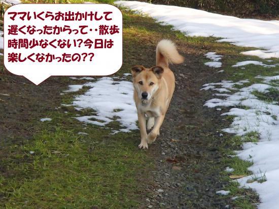 P1230291_convert_20140124082552.jpg