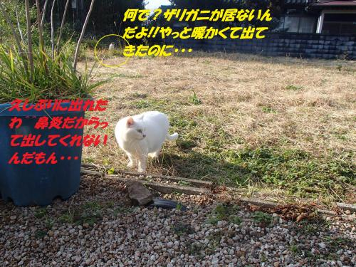 PC236309_convert_20131227072632.jpg