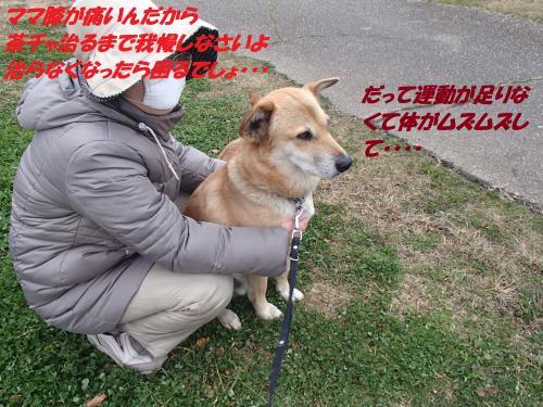 PC236317_convert_20131228071428.jpg