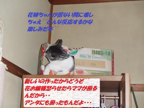 PC246322_convert_20131227072720.jpg