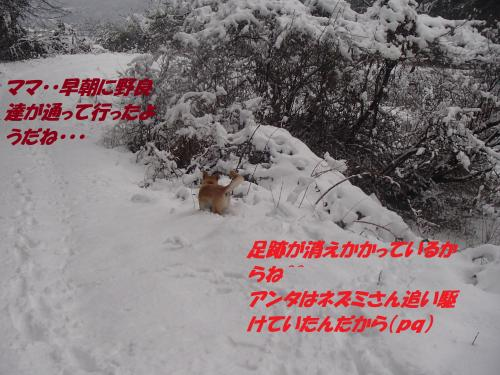 PC286363_convert_20131229074308.jpg