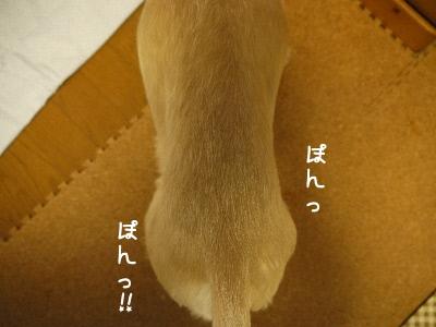 pp1I_.jpg