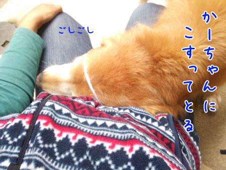 DSC_5153aquo2w45.jpg