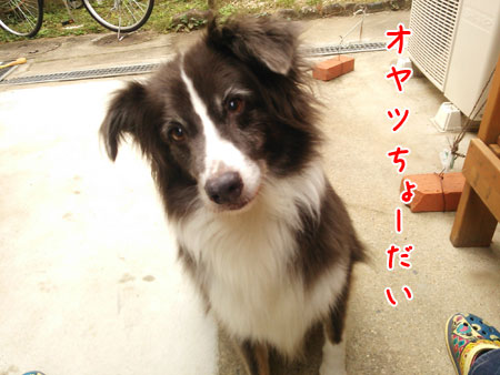 DSC_5171aquo2w45.jpg