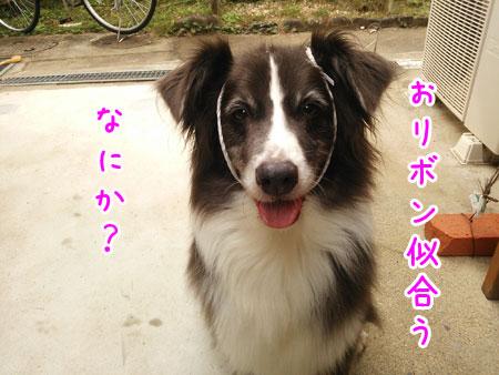 DSC_5172aquo2w45.jpg