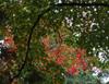 h22.10.30村内紅葉狩り06 のコピー.jpg