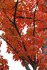 h22.10.30村内紅葉狩り02 のコピー.jpg