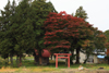 h22.10.30村内紅葉狩り03 のコピー.jpg