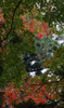 h22.10.30村内紅葉狩り05 のコピー.jpg