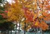 h22.10.30村内紅葉狩り01 のコピー.jpg