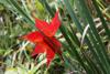 h22.10.30村内紅葉狩り08 のコピー.jpg
