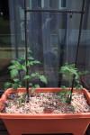 h23,6,4庭いじり02_1