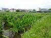 h23,6,5中津川畔ジョグ03_1