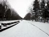 h23,12,25雪の県営運動公園でジョグのコピー