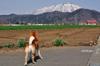 h24,4,21岩手山を見て龍太何思うのコピー