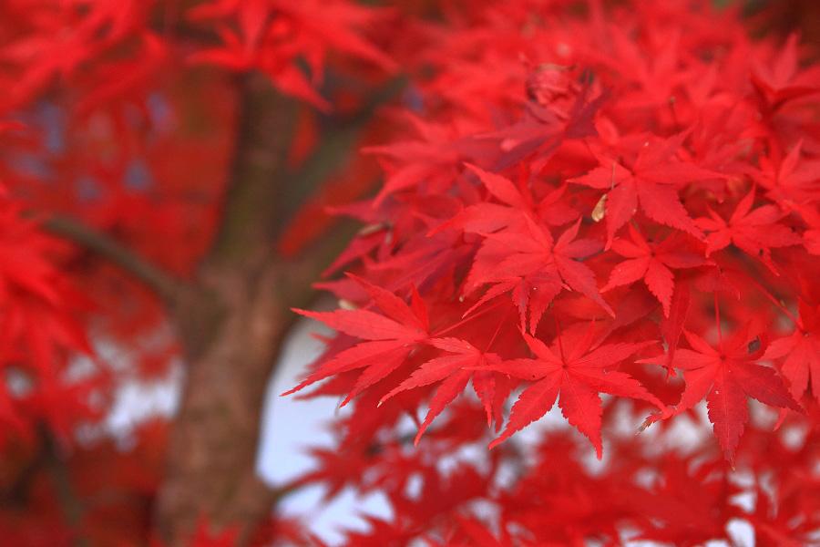 2014年11月21日・満願寺紅葉5