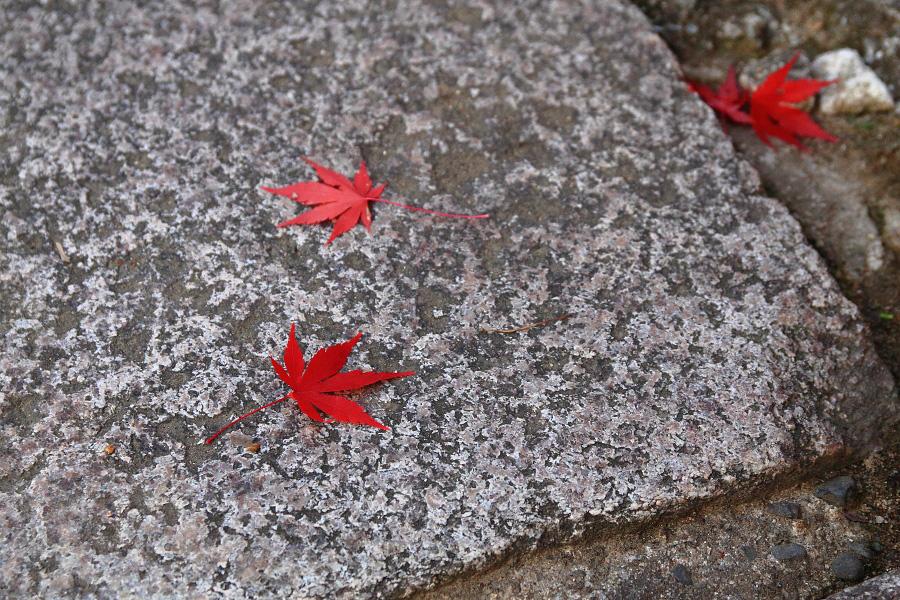 2014年11月21日・満願寺紅葉6