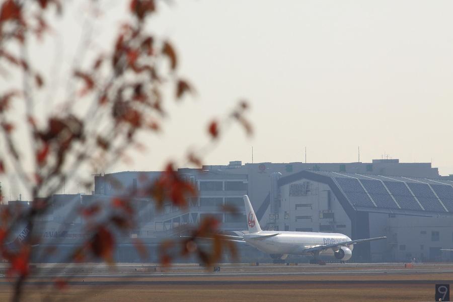JAL B777-346 / JAL2081 (JA752J)@RWY14Rエンド・猪名川土手