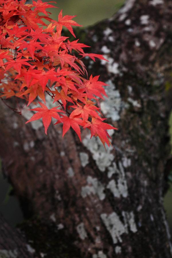 2014年11月27日・満願寺紅葉3