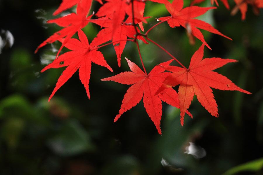 2014年11月27日・満願寺紅葉4