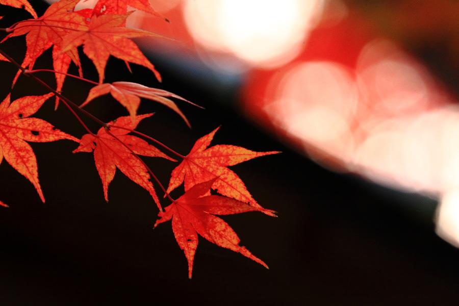2014年11月27日・満願寺紅葉5