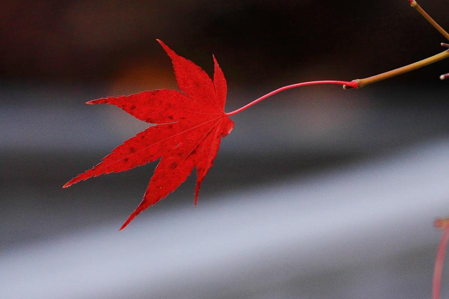 2014年11月27日・満願寺紅葉6