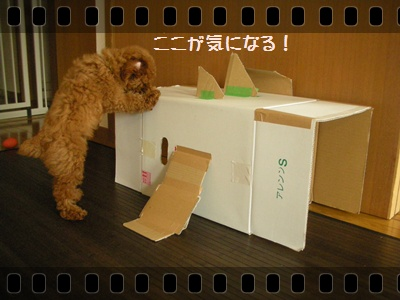 010_20110720234342.jpg