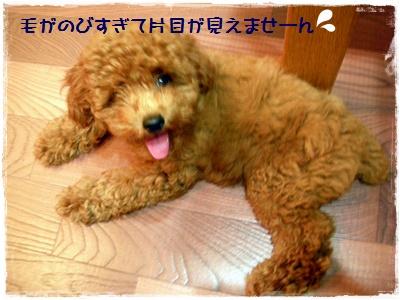 031_20110719214138.jpg