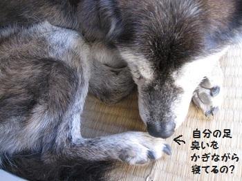 1_20111012200855.jpg
