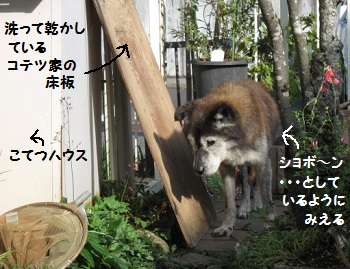 3_20111006195700.jpg