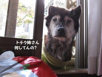 3_20111203162540.jpg