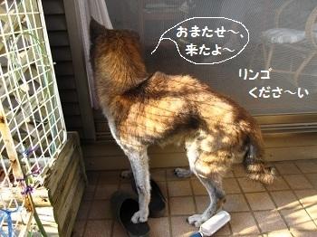4_20111012225431.jpg