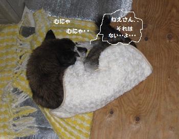 4_20111128212436.jpg