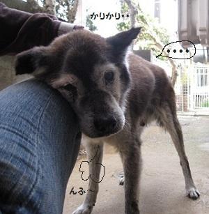 5_20111012200852.jpg