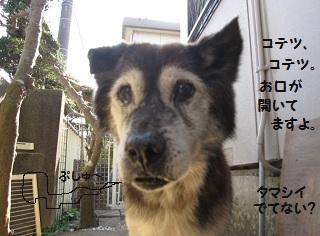 5_20111101221954.jpg