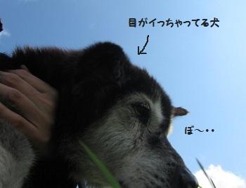 5_20111123212406.jpg