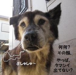 6_20111101221954.jpg