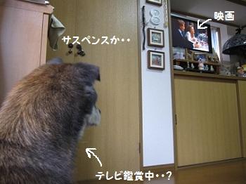 7_20111109214346.jpg