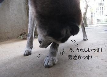 8_20111012200853.jpg