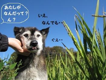 8_20111125230054.jpg