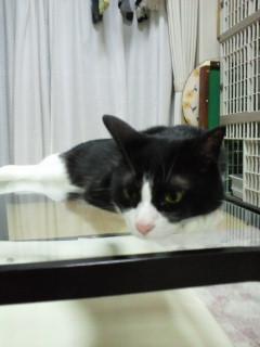 かまえる猫 4