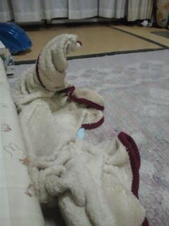 ニコの毛布