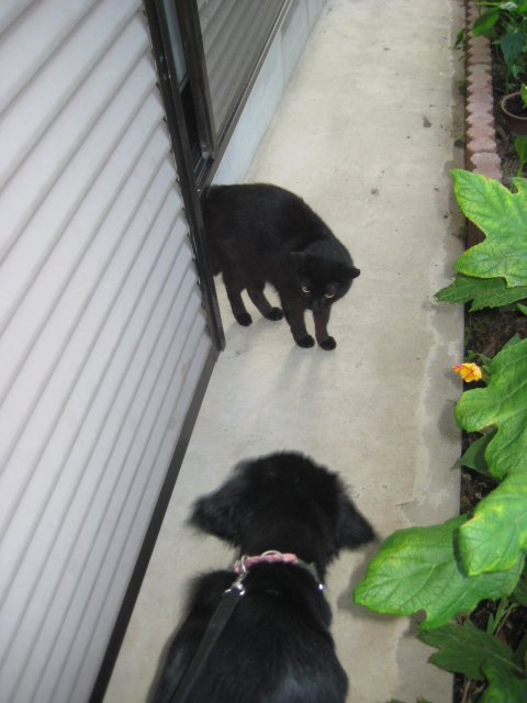 猫とニーナ