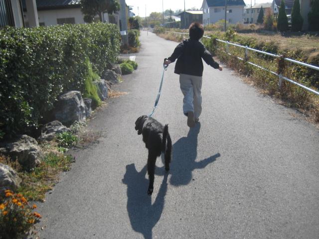 ニーナにぃと散歩。