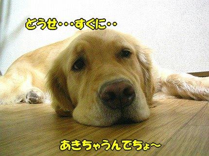 SANY7014_20100713201835.jpg