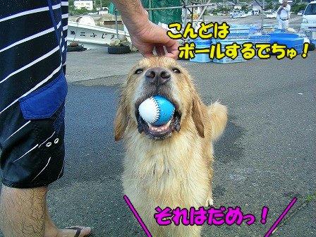 SANY7043_20100726141830.jpg